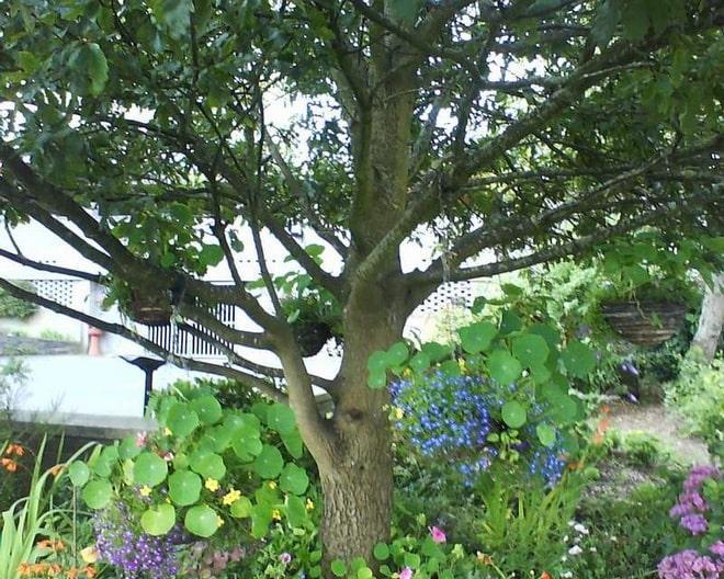 Дикорастущие цветы под яблоней