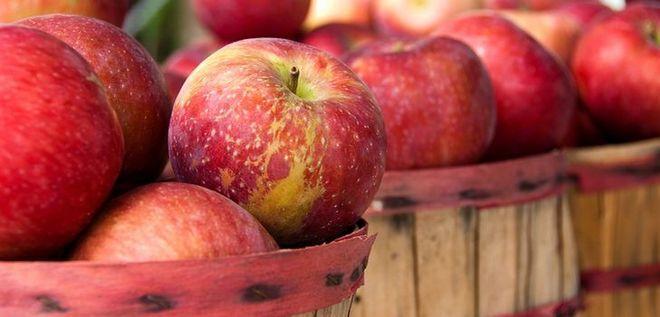 Один из способов хранения урожая яблони Превосходное