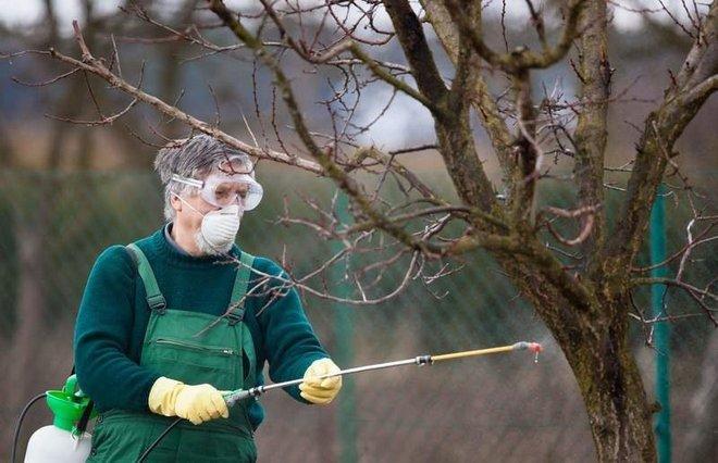Обработка яблони от рака
