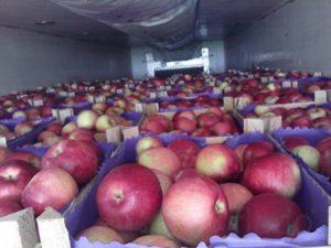 Плоды яблок Супер Прекос