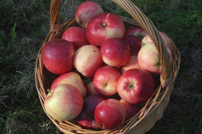 Яблоки Афродита