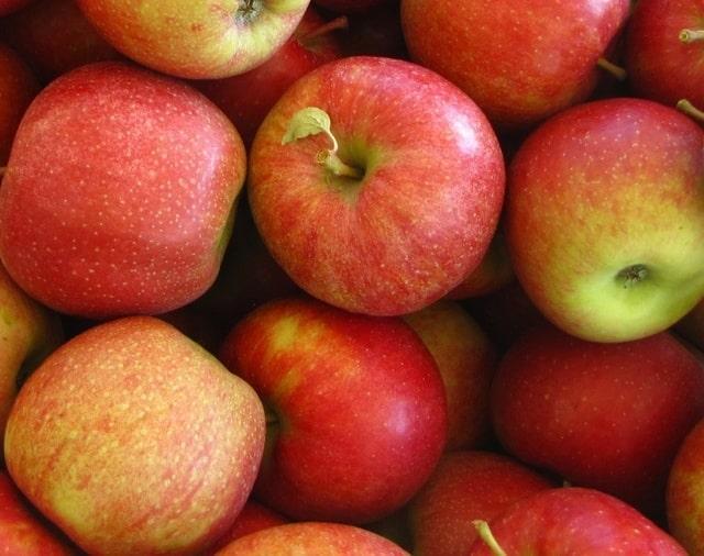 Урожай яблок Топаз