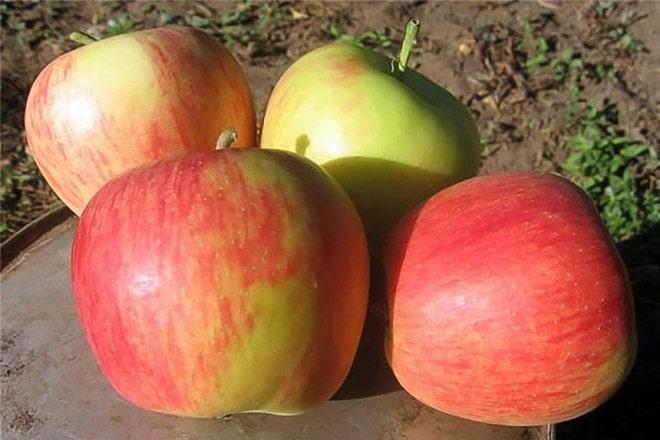 Яблоки Целесте