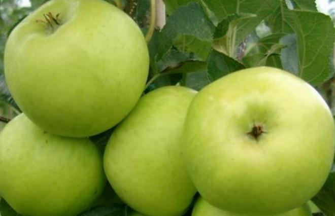 Яблоки Каштель