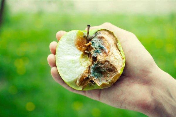 Яблоко с гнилью