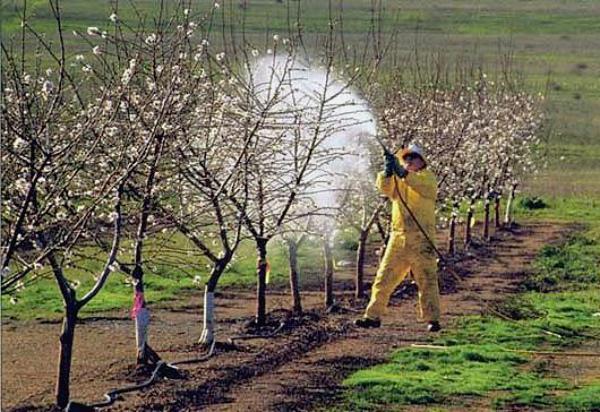 Процесс обработки яблонь