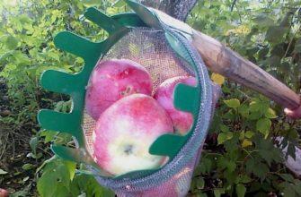Устройство для сбора яблок