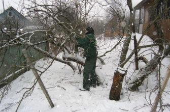 Обрезка яблони зимой