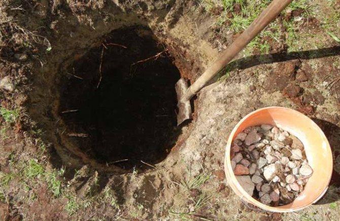 как посадить яблоню в глинистый грунт.